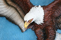 AMERICAN BALD EAGLE Close Up